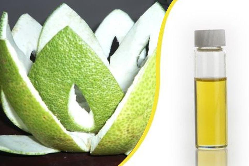 Chiết tinh dầu từ vỏ bưởi trị rụng tóc